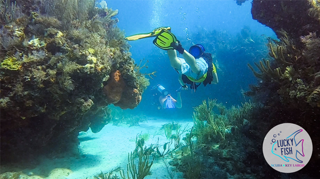 scuba divers key largo reef