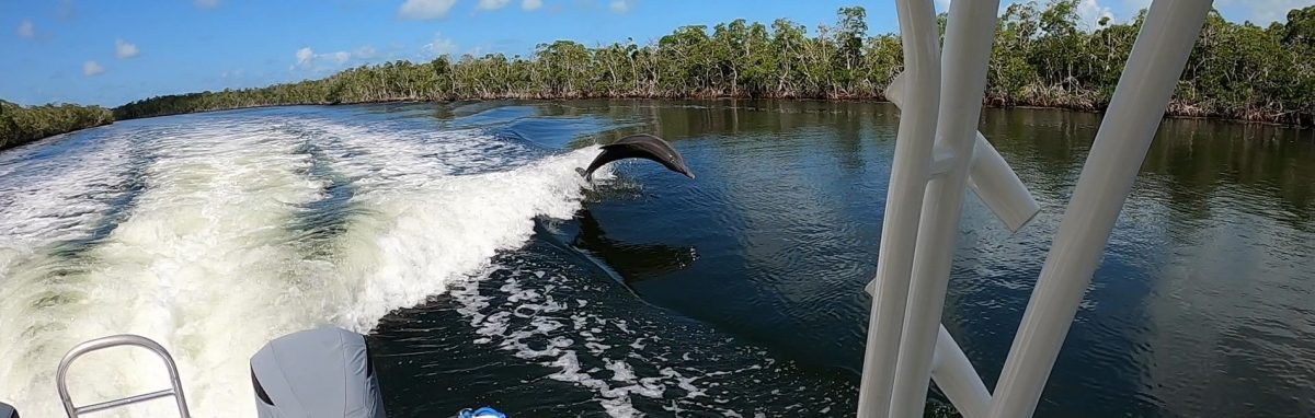 dolphin swimming with the lucky fish on our eco tour